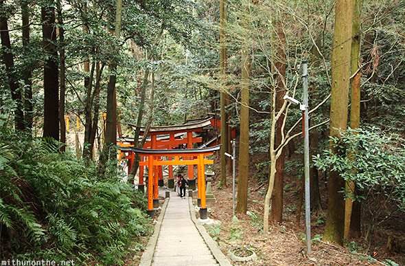Fushimi Inari mountain forest Japan