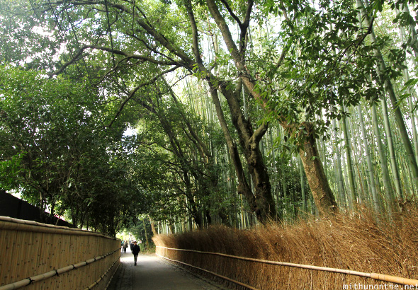 Walkway bamboo forest Kyoto