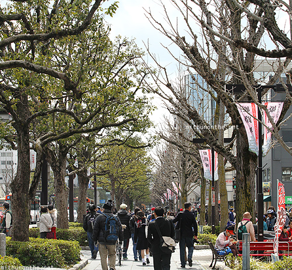 Himeji city pavement trees Japan