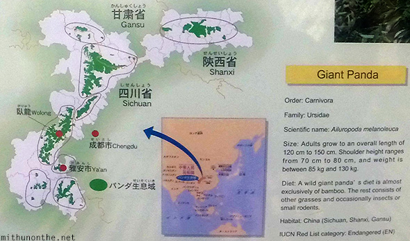 Giant panda facts Ueno zoo