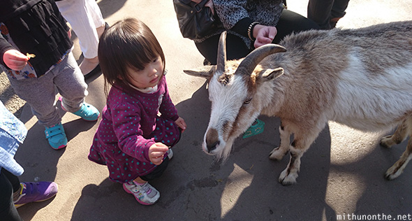 Japanese kid feeding goat Ueno zoo