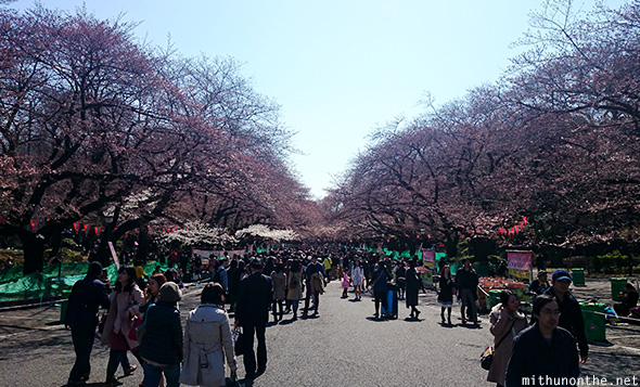 Ueno park half bloom sakura season