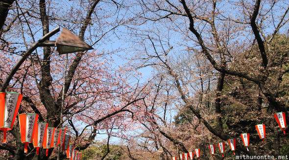 Ueno park sakura tree yet to blossom