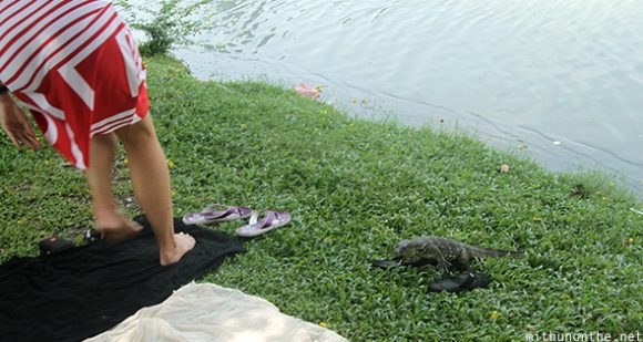Monitor lizard approaching man Bangkok