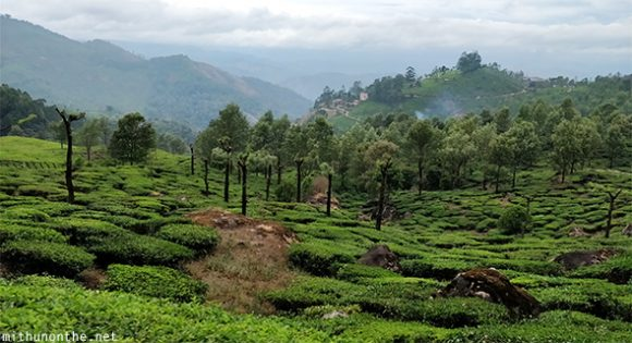 Kannan Devan Munnar tea estate