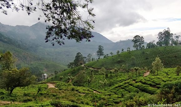Munnar hill station view